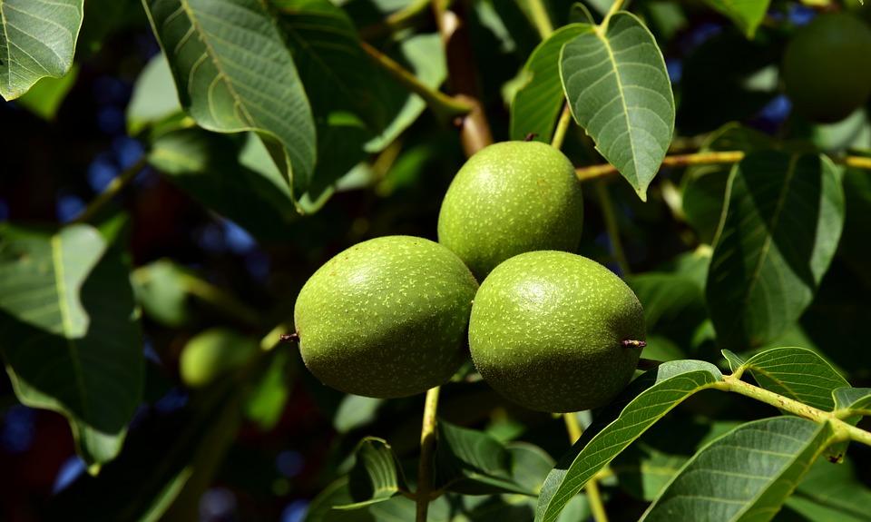 walnuts-3549580_960_720